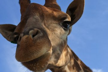 Riddles, Giraffes, and Jesus